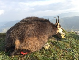 -grand-chelem-chamois-vercors.jpg