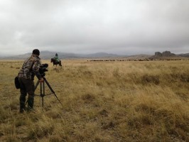 07chasse-tetras-lyre-kazakhstan-cameraman-film-seasons-ovini-expeditions.jpg