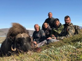 2.9.1-chasse-boeuf-musque-groenland-ovini-expeditions.jpg
