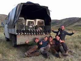 3-a-ovini-expeditions-chasse-chasse-tetras-perdrix-kazakhstan-2017.jpg
