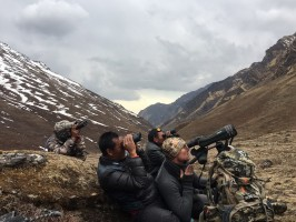 3a-reperage-blue-sheep-nepal-chasse-ovini-expeditions.jpg