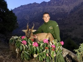 4-3Trophee-muntjac-magnifique-vincent chasse-nepal-ovini-expeditions.jpg