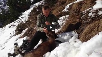 Chasse hivernale au chamois