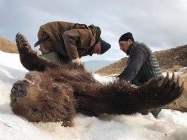 b-2-f-ovini-expeditions-Kamtchatka-chasse-extreme-ours-.jpg