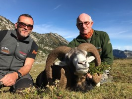 b-chasse-mouflon-alpes-nord-ovini-expeditions-2017.jpg