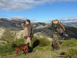 b3-guide-chien-reperage-cerf-chasse-espagne-ovini-expeditions.jpg
