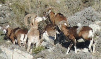 belle-vision-chasse-guidee-ovini-expeditions.jpg