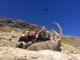 bouquetin-chasse-suisse-ovini-expeditions.jpg
