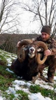 c-laurent-mouflon-or-chasse-gibier-montagne-ovini-expeditions.jpg
