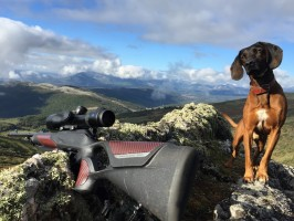 c5-chien-chasse-cerf-ovini-expeditions-espagne.jpg