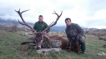 chasse-cerf-brame-espagne-programme-ovini-expeditions.jpg