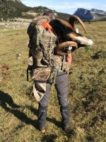 chasse-mouflon-alpes-nord-ovini-expeditions.jpg