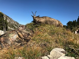 d2-chamois-medaillable-chasse-alpes-nord-ovini-expeditions-2017.jpg