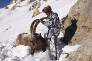 ovini-expeditions-IBEX.JPG