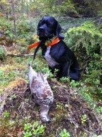 ovini-expeditions-chasse-chien-arret-suede.JPG