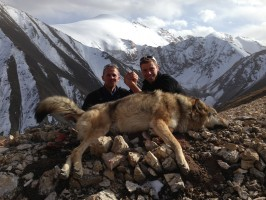 ovini-expeditions-chasse-kirghizstan-loup-au-tableau.jpg