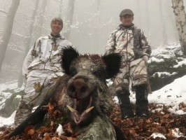 ovini-expeditions-chasse-montagne-sanglier-france.jpg