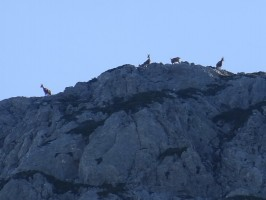 paysage-chasse-isards-efrance-ovini-expeditions.jpg