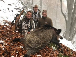 sanglier-approche-ovini-expeditions-chasse-france.jpg