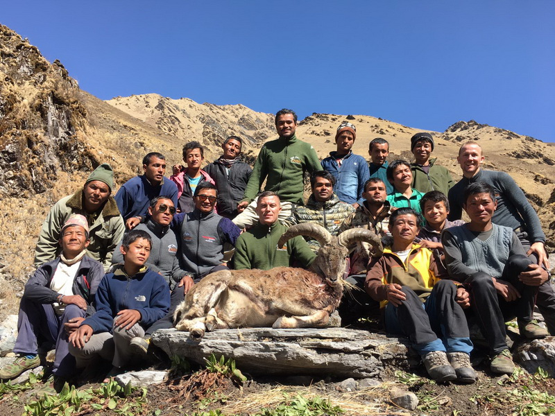 3 6 trophee blue sheep equipe chasseur guides ovini expeditions nepal