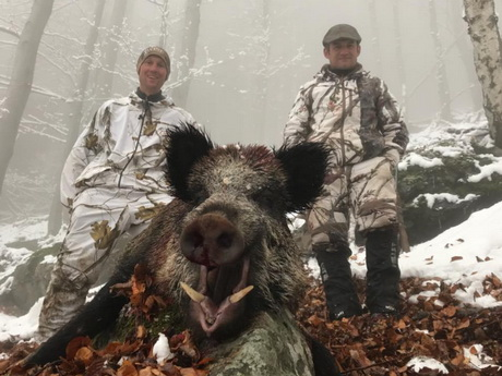 ovini expeditions chasse montagne sanglier france