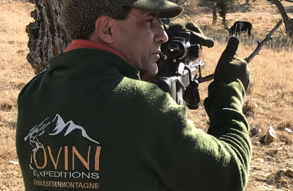 france chasse mouflon ovini expeditions
